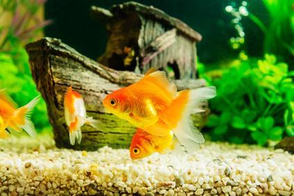 Kunstharz und Aquarium